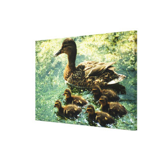 ducks stretched canvas print