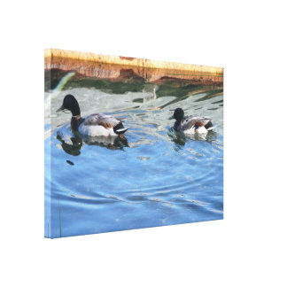 ducks stretched canvas prints