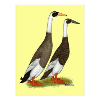 Ducks:  Emery Penciled Runners Postcard