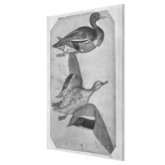 Ducks, from the The Vallardi Album Stretched Canvas Print