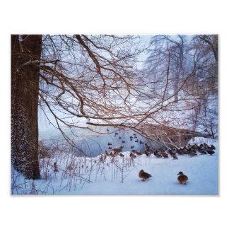 Ducks Gather Around A Frozen Pond Art Photo