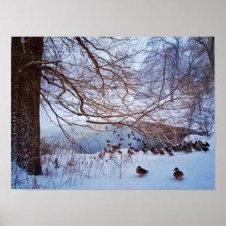 Ducks Gather Around A Frozen Pond Poster