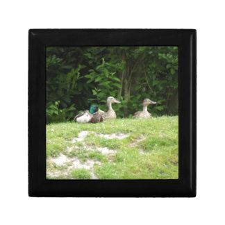 Ducks Small Square Gift Box