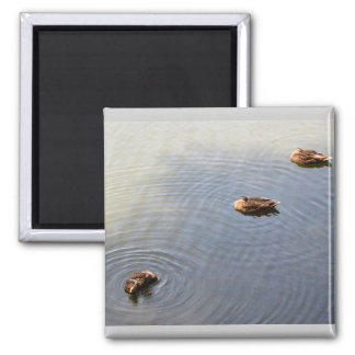 ducks in a pond magnet