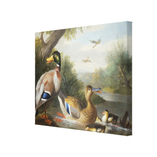 Ducks in a River Landscape Stretched Canvas Prints