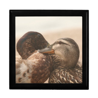 Ducks in Love Gift Box