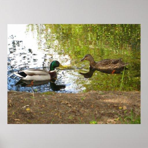 """Ducks In Love"" Poster"