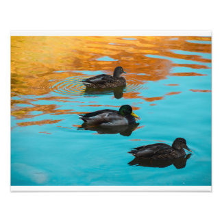 Ducks in pond fall photo
