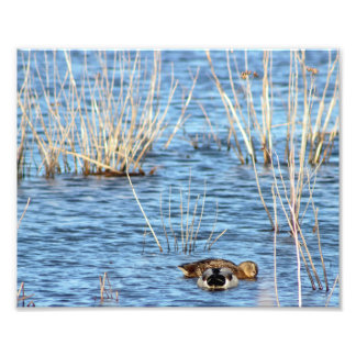 Ducks in water at the refuge photo print