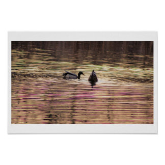 Ducks Looking for Food Poster