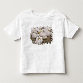 Ducks on a pond toddler T-Shirt