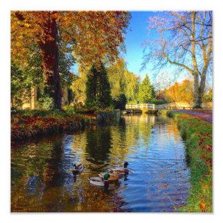 Ducks on an English River Photo Print