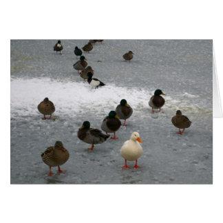 Ducks on Ice Card