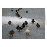 Ducks on Ice Note Card