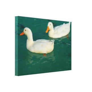Ducks pair canvas print