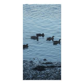 Ducks. Photo Card Template