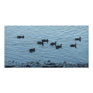 Ducks. Photo Cards