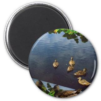 DUCKS pond nature printed gifts KIDS love bird pet 2 Inch Round Magnet