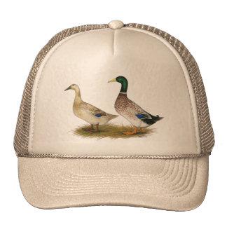 Ducks:  Silver Welsh Harlequin Hat