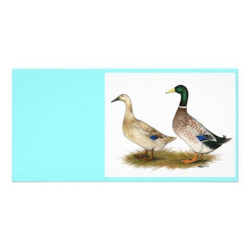 Ducks:  Silver Welsh Harlequin Custom Photo Card