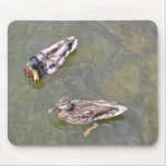 Ducks Swimming in the lake Mouse Pad
