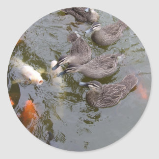 Ducks Vs Koi - Sticker
