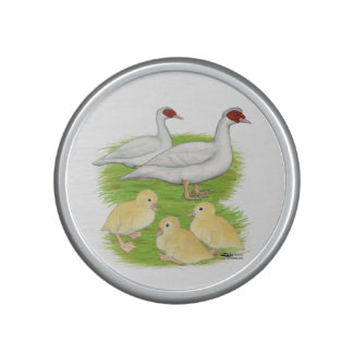 Ducks White Muscovy Family Speaker