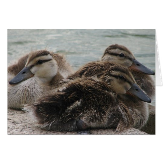 Ducky Day Greeting Card