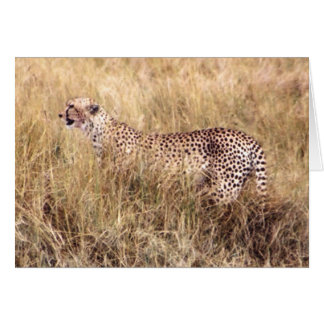 Duma (Cheetah) Card