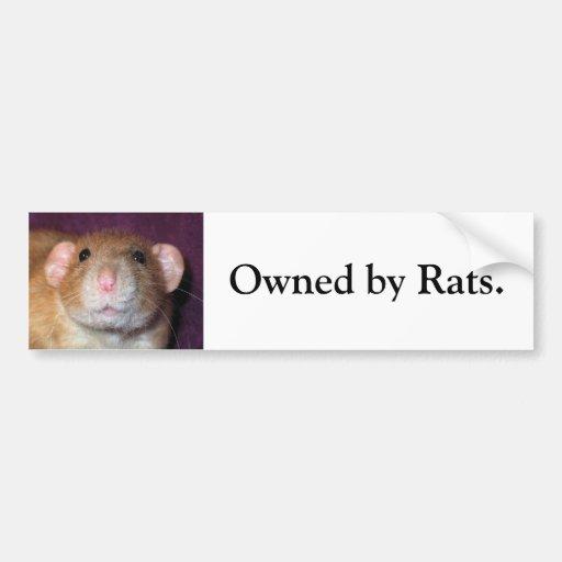 Dumbo Rat Bumper Sticker