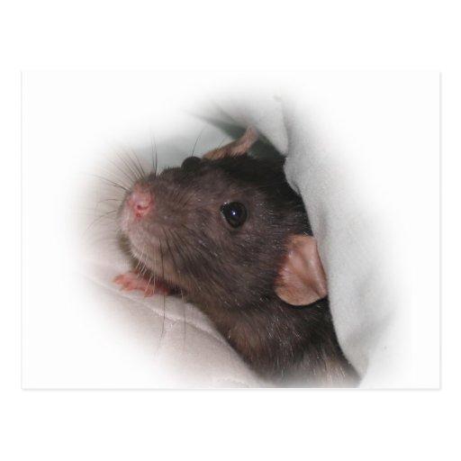 Dumbo rat wanna play? postcards