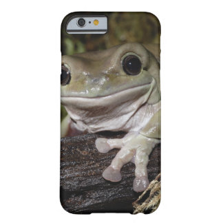 Dumpy Tree Frog. Smiling Frog. Litoria caerulea. Barely There iPhone 6 Case