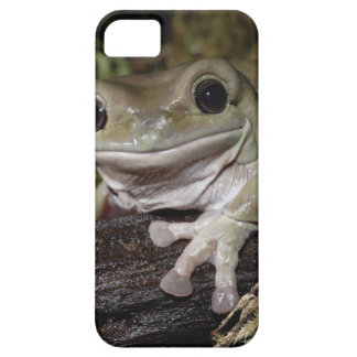 Dumpy Tree Frog. Smiling Frog. Litoria caerulea. iPhone 5 Cases