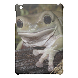 Dumpy Tree Frog. Smiling Frog. Litoria caerulea. iPad Mini Cover