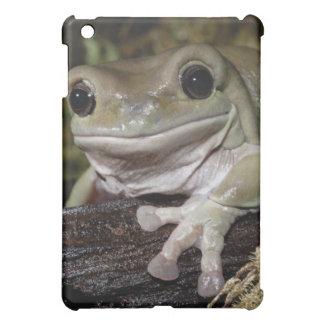Dumpy Tree Frog. Smiling Frog. Litoria caerulea. iPad Mini Cover