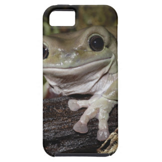 Dumpy Tree Frog. Smiling Frog. Litoria caerulea. iPhone 5 Covers