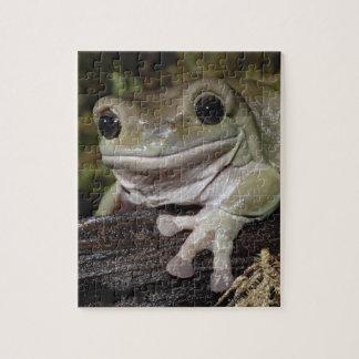 Dumpy Tree Frog. Smiling Frog. Litoria caerulea. Jigsaw Puzzle