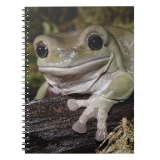Dumpy Tree Frog. Smiling Frog. Litoria caerulea. Notebooks
