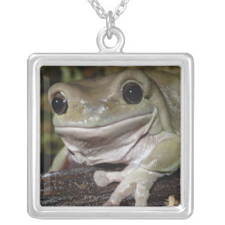 Dumpy Tree Frog. Smiling Frog. Litoria caerulea. Silver Plated Necklace