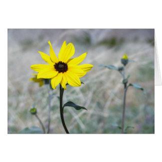 Dune Sunflower Card