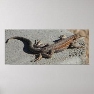 dunes sage brush lizard poster
