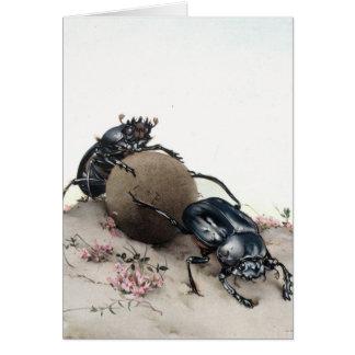 Dung Bettle Card