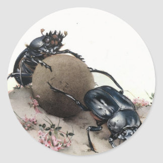 Dung Bettle Round Stickers