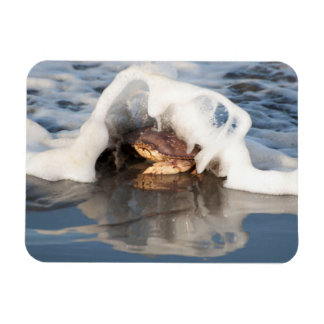 Dungeness Crab with the Surf Spilling Over! Rectangular Photo Magnet