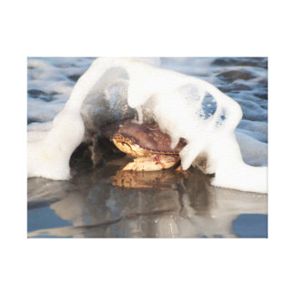 Dungeness Crab with the Surf Spilling Over! Stretched Canvas Prints