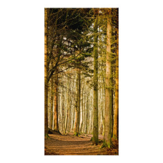 Dunotar Woods Customised Photo Card