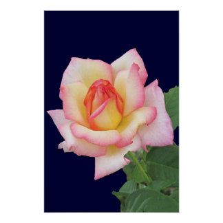 Duo-tone Pink Rose Poster