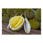 Durian King of Fruits in Singapore City Print