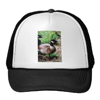 Dusky Canada Goose Mesh Hat