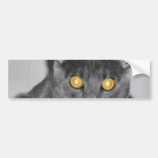 Dusky Gold Bumper Sticker